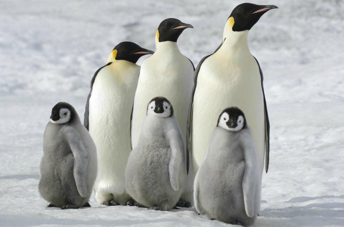 Célèbre La marcia dei pinguini – Il richiamo, la recensione | Darkside Cinema RO07